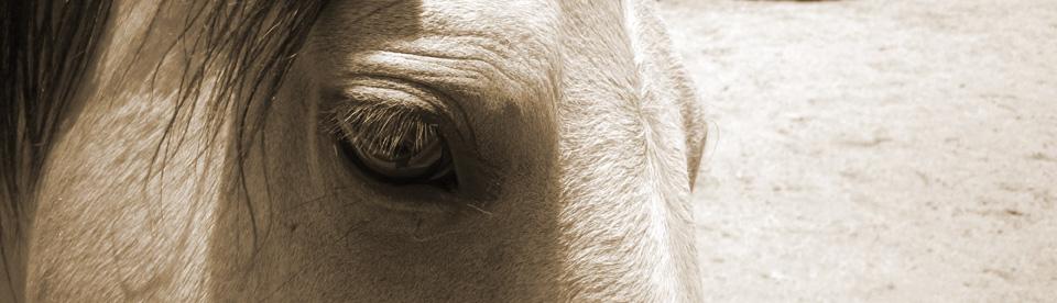 eyes-of-a-horse